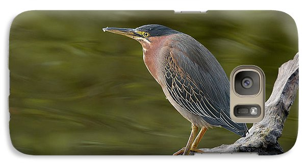 Galaxy Case featuring the photograph Green Heron by Doug Herr
