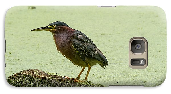 Galaxy Case featuring the photograph Green Heron by Doug McPherson