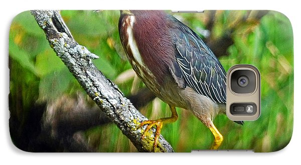 Galaxy Case featuring the photograph Green Heron by Rodney Campbell