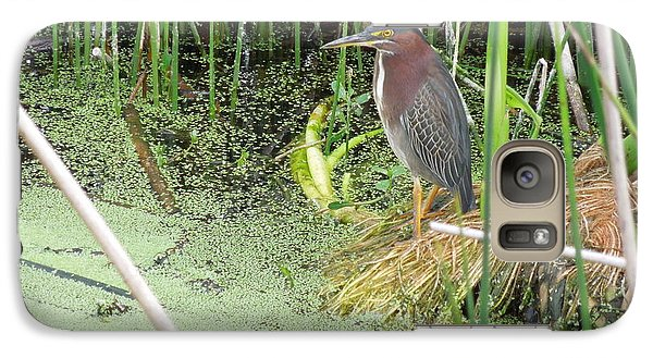 Galaxy Case featuring the pyrography Green Heron by Ron Davidson