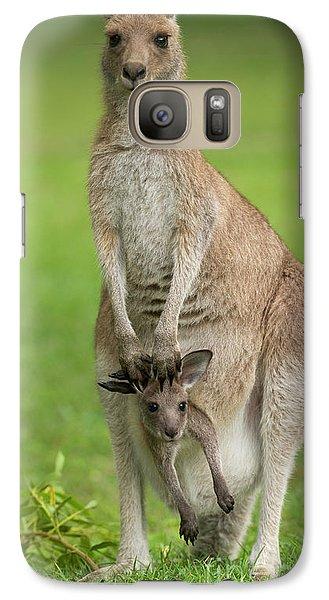 Kangaroo Galaxy S7 Case - Grey Kangaroo And Joey  by Yva Momatiuk John Eastcott
