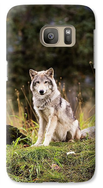 Grey Wolf  Canis Lupus  Pup Roams It S Galaxy Case by Doug Lindstrand