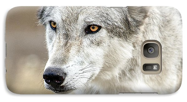 Galaxy Case featuring the photograph Grey Wolf Eyes by Yeates Photography