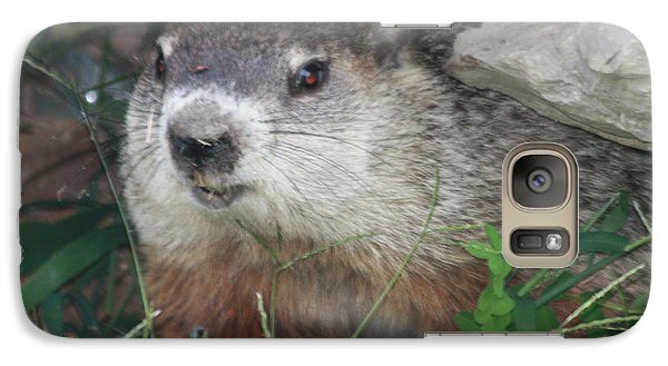 Groundhog Galaxy S7 Case - Groundhog Hiding In His Cave by John Telfer