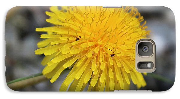 Galaxy Case featuring the photograph Guesthouse by Jesslyn Fraser