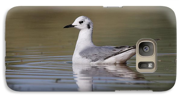 Galaxy Case featuring the photograph Gull In Morning Light by Ruth Jolly