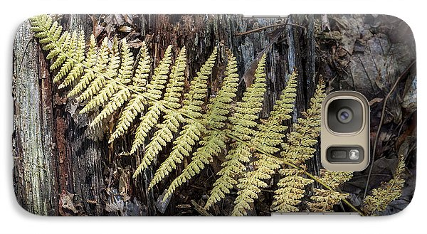 Galaxy Case featuring the photograph Hay-scented Fern by Andrew Pacheco