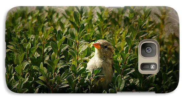 Galaxy Case featuring the photograph Hide And Seek by Mariola Bitner