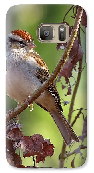 Galaxy Case featuring the photograph His Eyes Are On The Sparrow by Phyllis Beiser