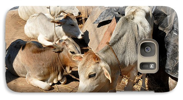 Galaxy Case featuring the photograph Holy Cows Odisha India by Diane Lent