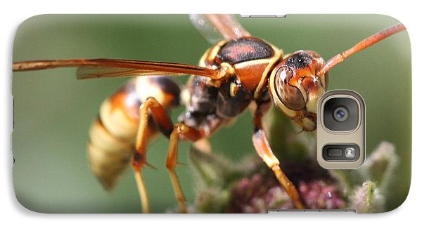 Galaxy Case featuring the photograph Hornet On Flower by Nathan Rupert