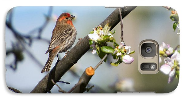 House Finch Galaxy S7 Case by Mike Dawson