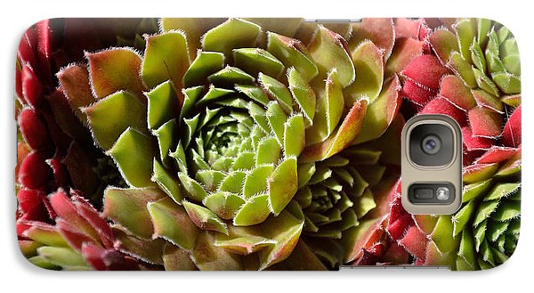 Galaxy Case featuring the photograph Houseleek Group by Scott Lyons