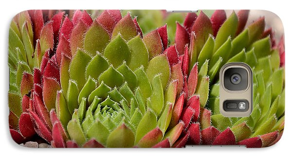 Galaxy Case featuring the photograph Houseleeks Aka Sempervivum From The Side by Scott Lyons