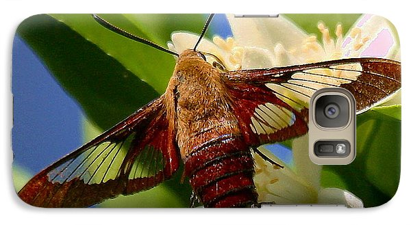 Galaxy Case featuring the photograph Hummingbird Clearwing Moth by Myrna Bradshaw