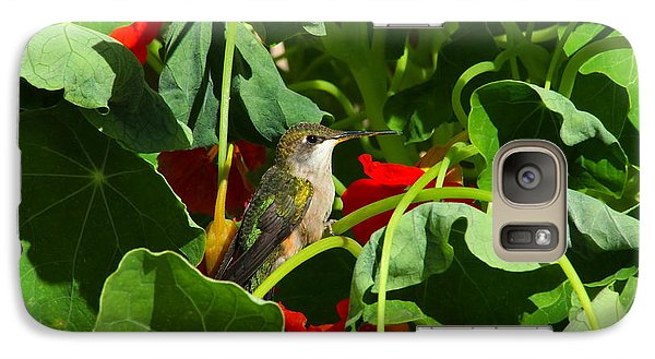 Galaxy Case featuring the photograph Hummingbird In The Nasturtiums by Marjorie Imbeau