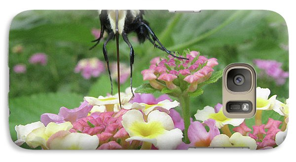 Galaxy Case featuring the photograph Hummingbird Moth by Donna Brown
