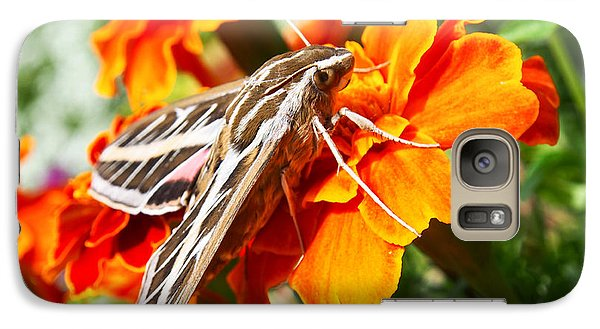 Hummingbird Moth On A Marigold Flower Galaxy S7 Case