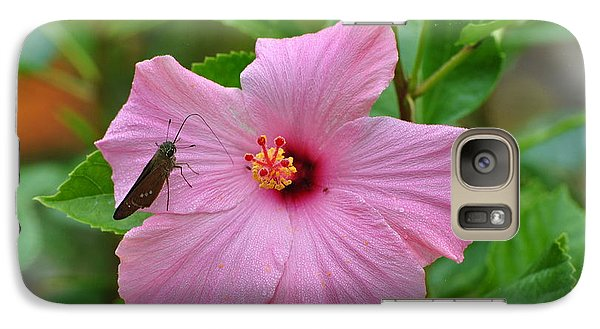 Galaxy Case featuring the photograph Hummingbird Moth On Pink Hybiscus by Jodi Terracina