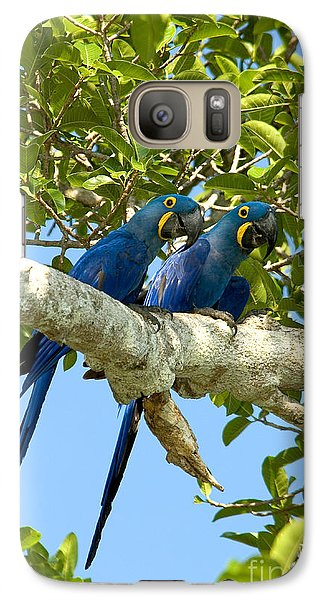 Hyacinth Macaws Brazil Galaxy Case by Gregory G Dimijian MD