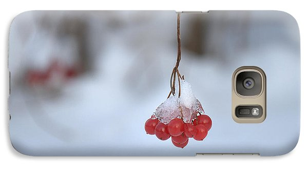 Galaxy Case featuring the photograph Ice Berries by Sabine Edrissi