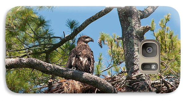 Galaxy Case featuring the photograph Immature Bald Eagle by Brenda Jacobs