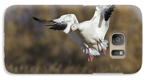 Galaxy Case featuring the photograph Incoming Snow Goose by Bryan Keil