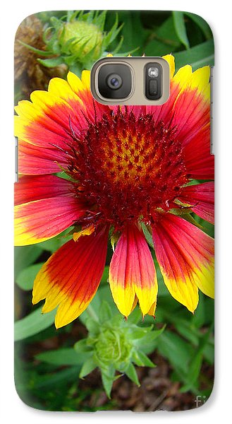 Galaxy Case featuring the photograph Indian Blanket Flower by Sue Melvin