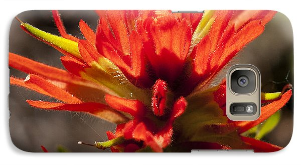 Galaxy Case featuring the photograph Indian Paintbrush by Belinda Greb