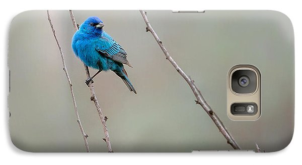 Indigo Bunting Square Galaxy Case by Bill Wakeley