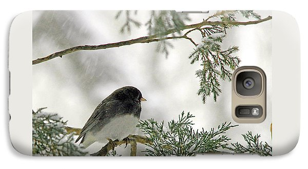 Galaxy Case featuring the photograph Junco In Snowstorm by Paula Guttilla