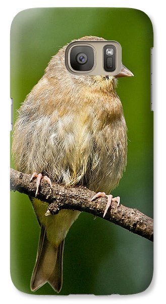 Galaxy Case featuring the photograph Juvenile American Goldfinch by Jeff Goulden