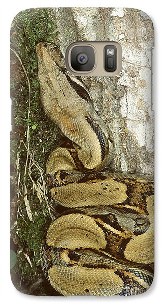 Juvenile Boa Constrictor Galaxy S7 Case by Gregory G. Dimijian, M.D.