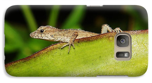 Galaxy Case featuring the photograph Juvie Brown Anole by Lynda awson-Youngclaus