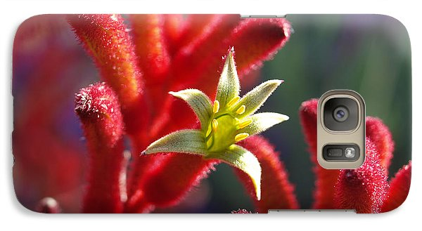 Galaxy Case featuring the photograph Kangaroo Star by Evelyn Tambour