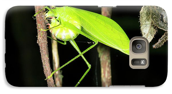 Katydid Laying Eggs Galaxy Case by Dr Morley Read