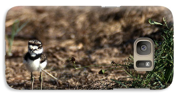 Killdeer Chick Galaxy S7 Case