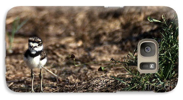 Killdeer Chick Galaxy Case by Skip Willits