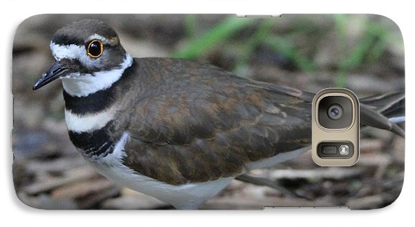 Killdeer Galaxy Case by Dan Sproul