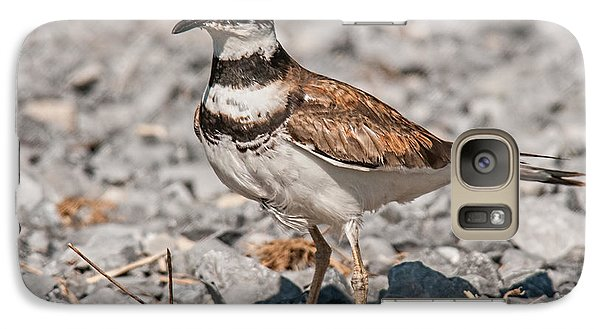 Killdeer Nesting Galaxy S7 Case by Lara Ellis