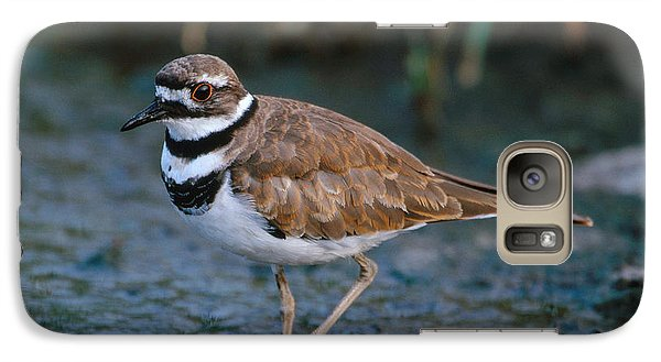 Killdeer Galaxy Case by Paul J. Fusco
