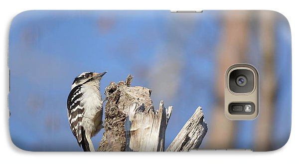 Galaxy Case featuring the photograph King Of The Tree Top by Dacia Doroff