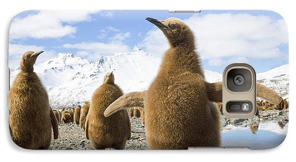 King Penguin Chicks South Georgia Island Galaxy S7 Case by Yva Momatiuk and John Eastcott