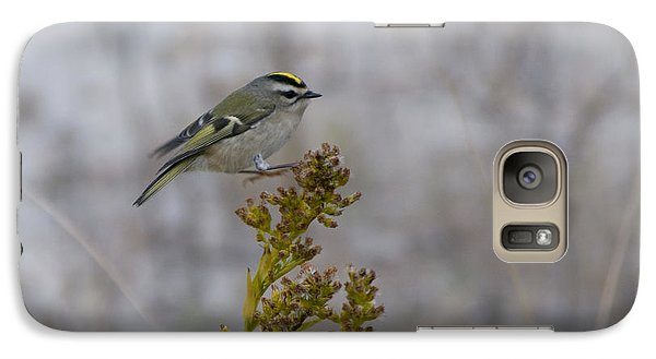 Galaxy Case featuring the photograph Kinglet by Greg Graham