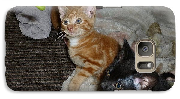 Galaxy Case featuring the photograph Kittens 1 by Miriam Shaw