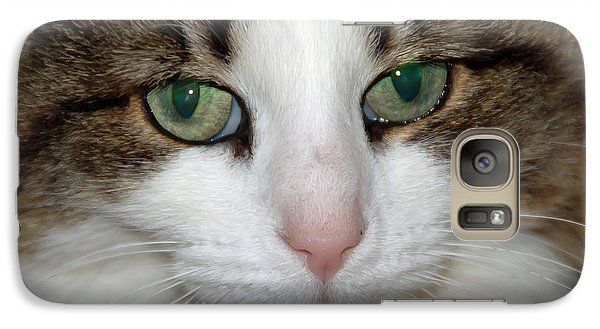 Galaxy Case featuring the photograph Kitty by Aimee L Maher Photography and Art Visit ALMGallerydotcom
