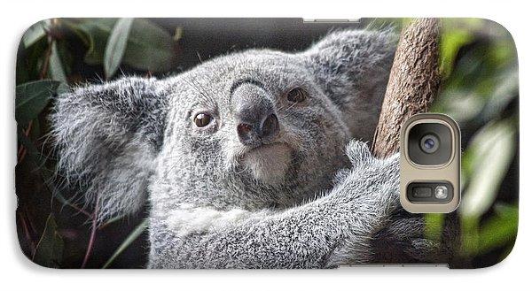 Koala Galaxy S7 Case - Koala Bear by Tom Mc Nemar