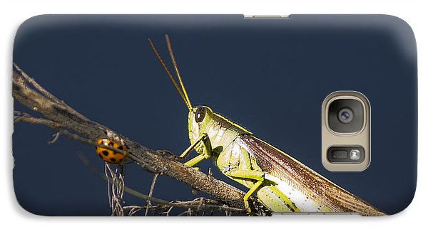 Galaxy Case featuring the photograph Lady Bug And Wise One by Paula Porterfield-Izzo