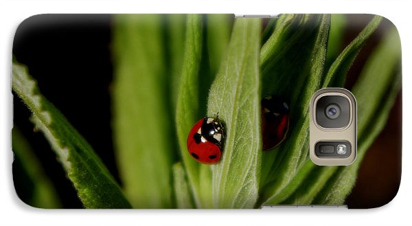 Galaxy Case featuring the photograph Ladybugs by Adria Trail