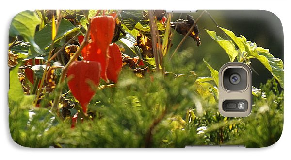 Galaxy Case featuring the photograph Lantern Plant by Brenda Brown